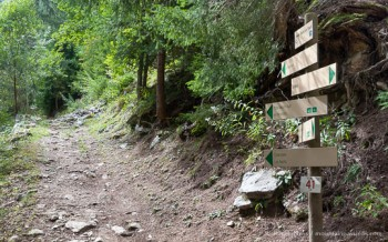 View of signed forest footpath trail above Chamonix
