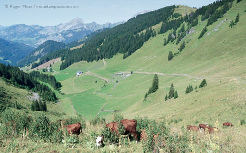 Barbossine Valley, Châtel, French Alps