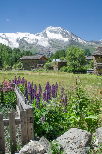 Le Monal in summer, snow covered peaks, village and lupins in flower