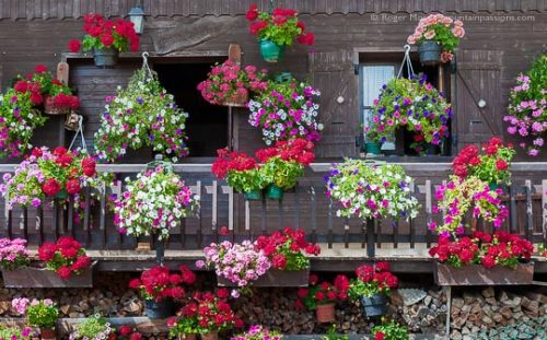 Mountain chalet decorated with geraniums, Hauteluce