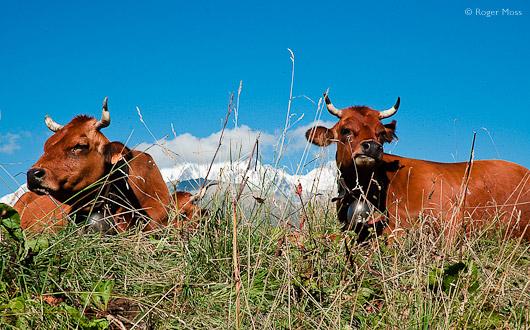 Route des Grandes Alpes II